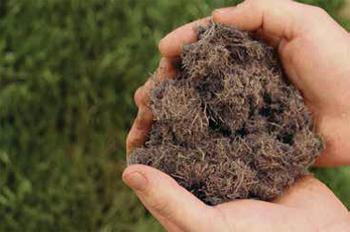 Biotic Soil Media