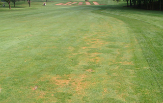 Anthracnose Disease Management
