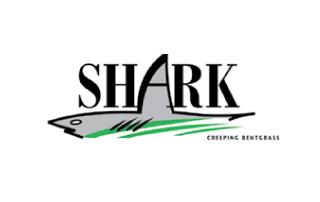 Shark Creeping Bentgrass
