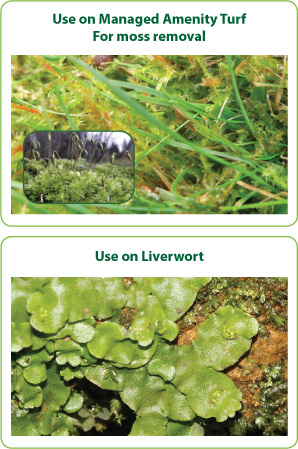 Moss Control on Grass - Use on Liverwort